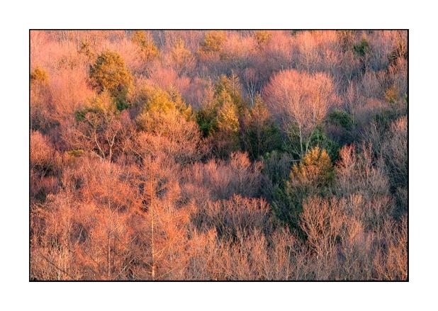 Winter Mountainside at First Light