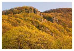 Spring Vista