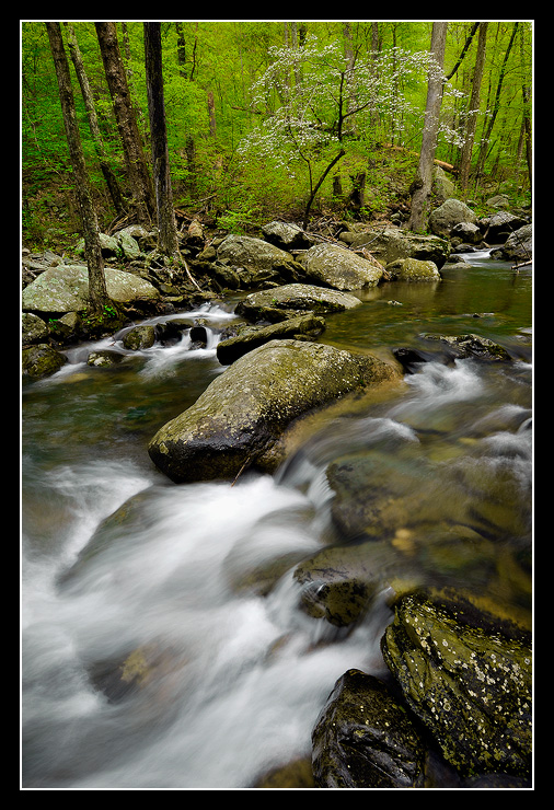 Dogwood and Stream