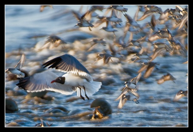 Escape from the Sanderlings