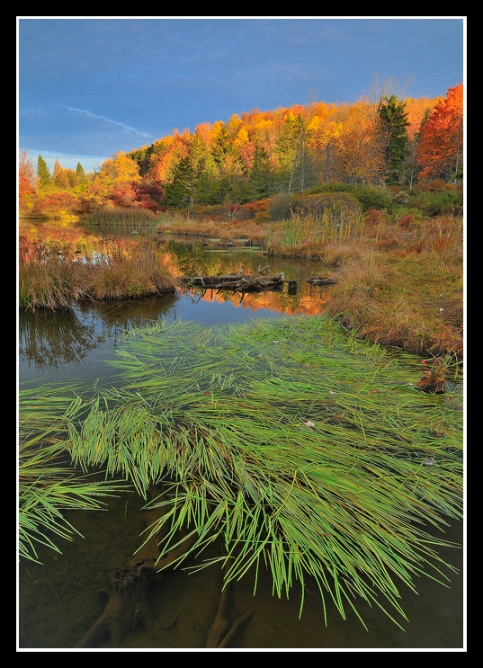 Autumn Color at Spruce Knob Lake