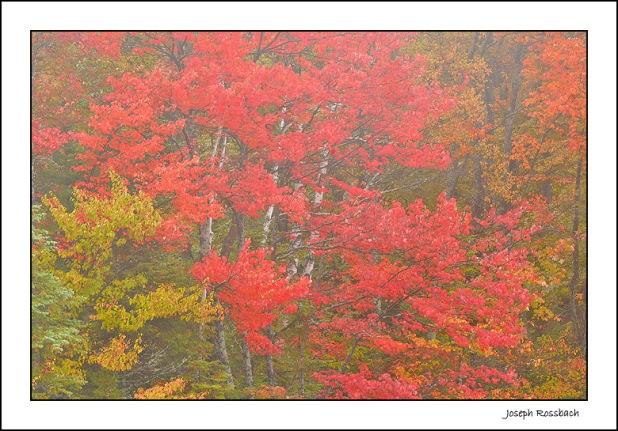 autumn_color_peacham_pond